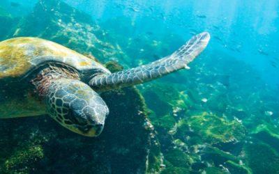 Expedición científica: Islas Galápagos y Ecuador