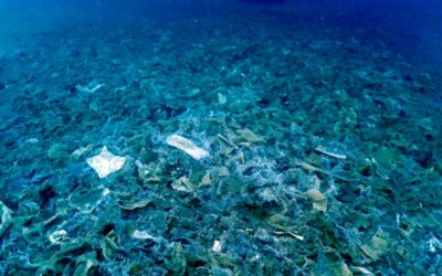 El Informe SILMAR, realizado por la Real Academia Europea de Doctores (RAED) y la Fundación RAED, evidencia un alto nivel de residuos en la playa de la Mar Bella de Barcelona