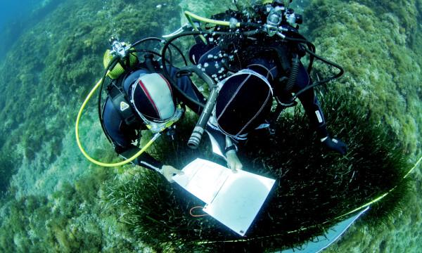 Experimentados biólogos registran datos a partir de las observaciones submarinas